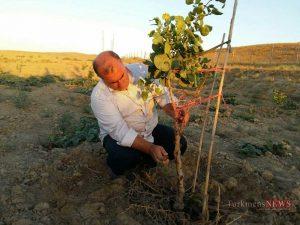 Arazi 21 Sh 300x225 - اراضی کمبازده گنبدکاووس مستعد کشت گیاهان دارویی و توسعه باغات