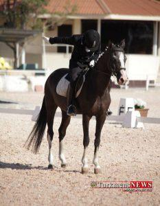 Asb Turkmen 13 1 M 233x300 - لزوم حمایت از اسبهای بومی به جای نژادهای خارجی/ کسب مقام سوم مسابقات سوارکاری با اسب ۳۱ ساله ترکمن