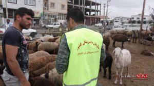 Dampezeshki 14 Sh 1 300x169 - 14 هزار راس دام در ایام عید قربان در گلستان بازرسی بهداشتی شد
