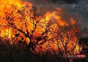 atash 29m 300x211 - آتش در جنگل قرق گرگان مهار شد