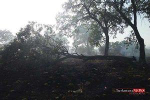 atashj 29sh 300x200 - آتش سوزی در جنگل های مراوه تپه و کلاله مهار شد