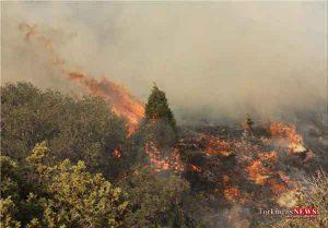 jangal 1m 300x209 - جنگلهای شهرستانهای رامیان و کلاله آتش گرفت