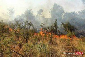 jangal 29sh 300x200 - آتش جنگل های سوزنی برگ مراوه تپه گلستان را سوزاند