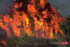 jangal 3m 300x199 - افزون بر 100 هکتار از جنگلهای سوزنی برگ دست کاشت گلستان سوخت